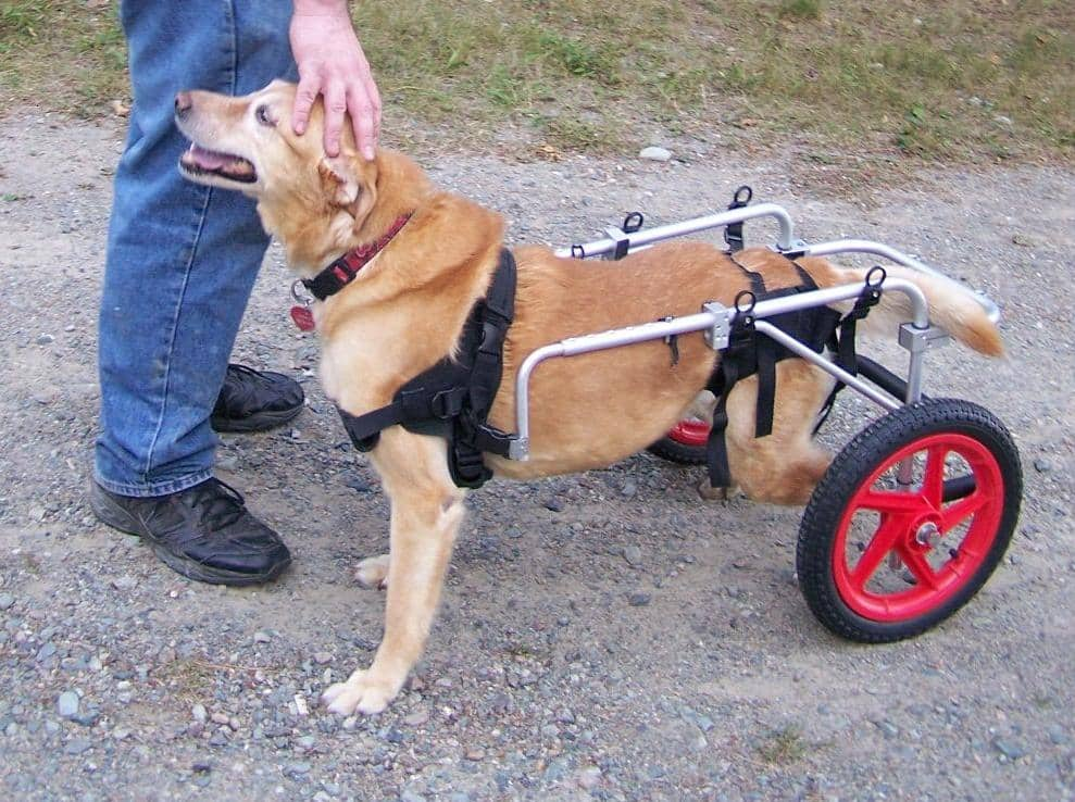 get a dog wheelchair