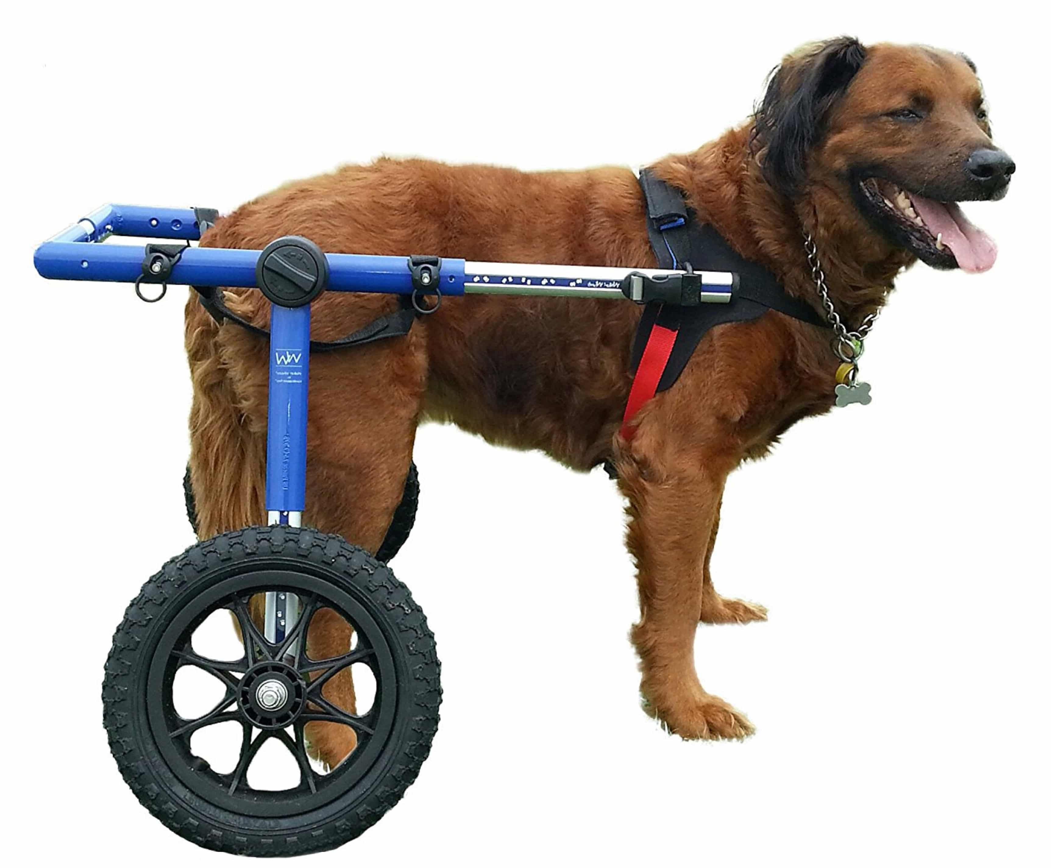 Dog Wheelchair For Large Dogs Reviews