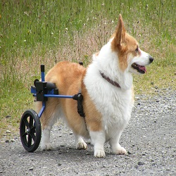 K9 Cart Rear Support Wheelchair Reviews