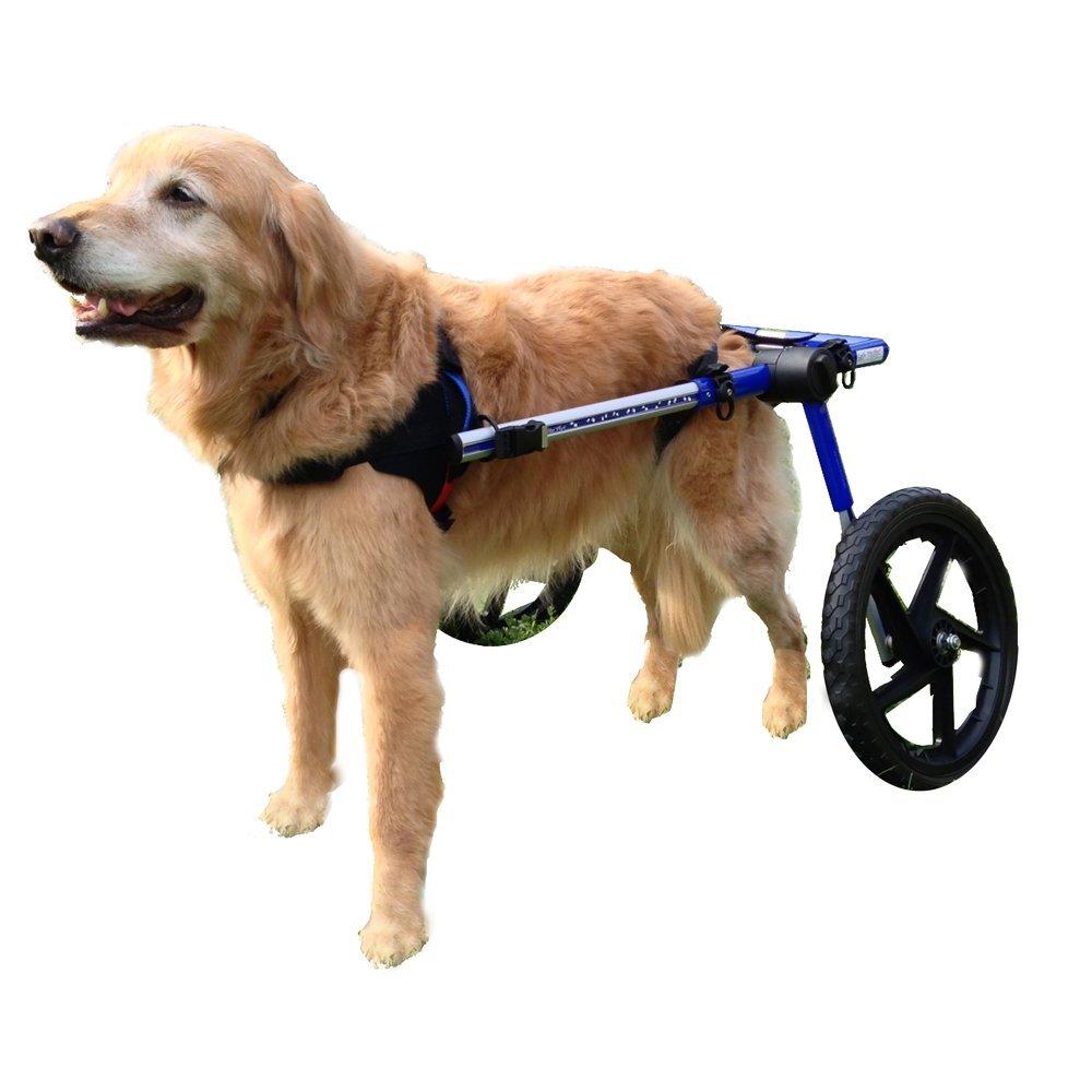 best dog wheelchair 2016