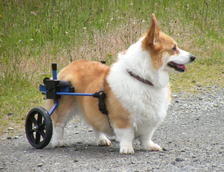 best dog wheelchair buy